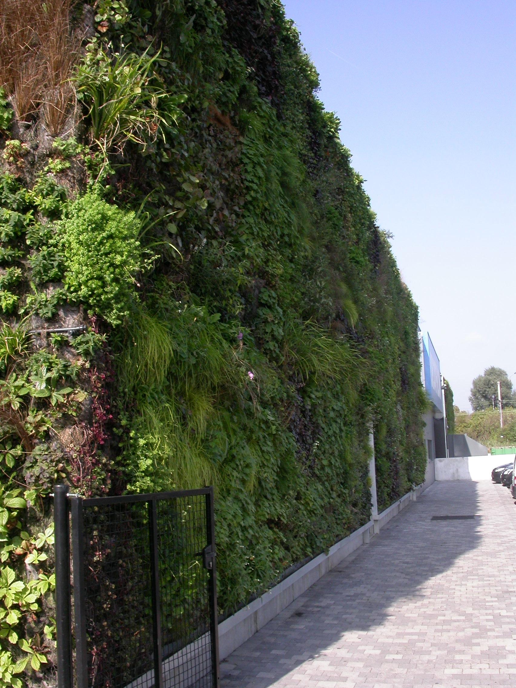 Mur végétal - Belgique