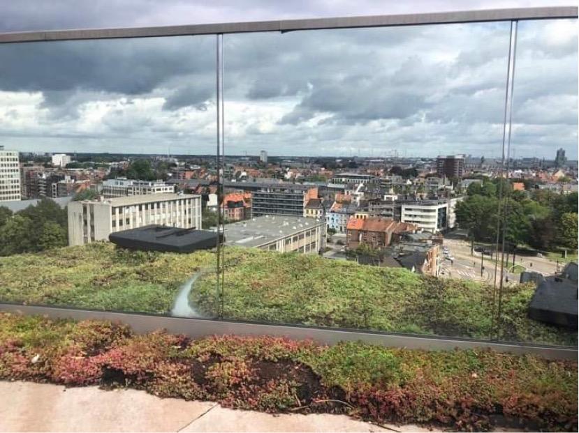 Toiture végétale - Bruxelles